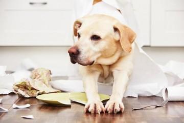 狗校园是怎么样练习狗狗的