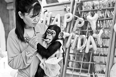小朋友为动物园小明猩庆生